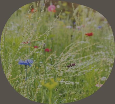 Blühwiesen und Insektenhotels